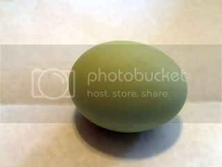 http://i333.photobucket.com/albums/m392/cicene_mete/Chickenandtheegg034-1.jpg